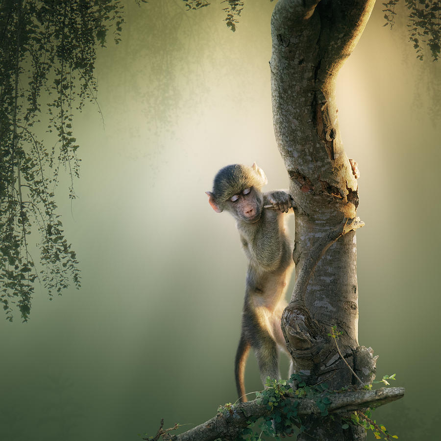 Baby Baboon In Tree Photograph