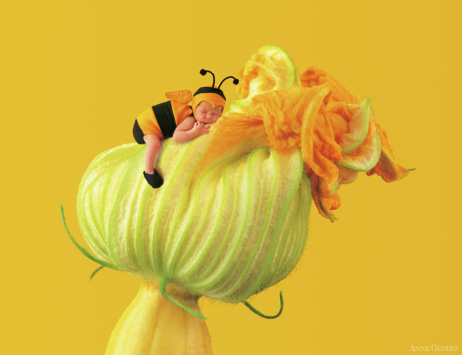 Yellow Photograph - Baby Bee on a Pumpkin Flower by Anne Geddes