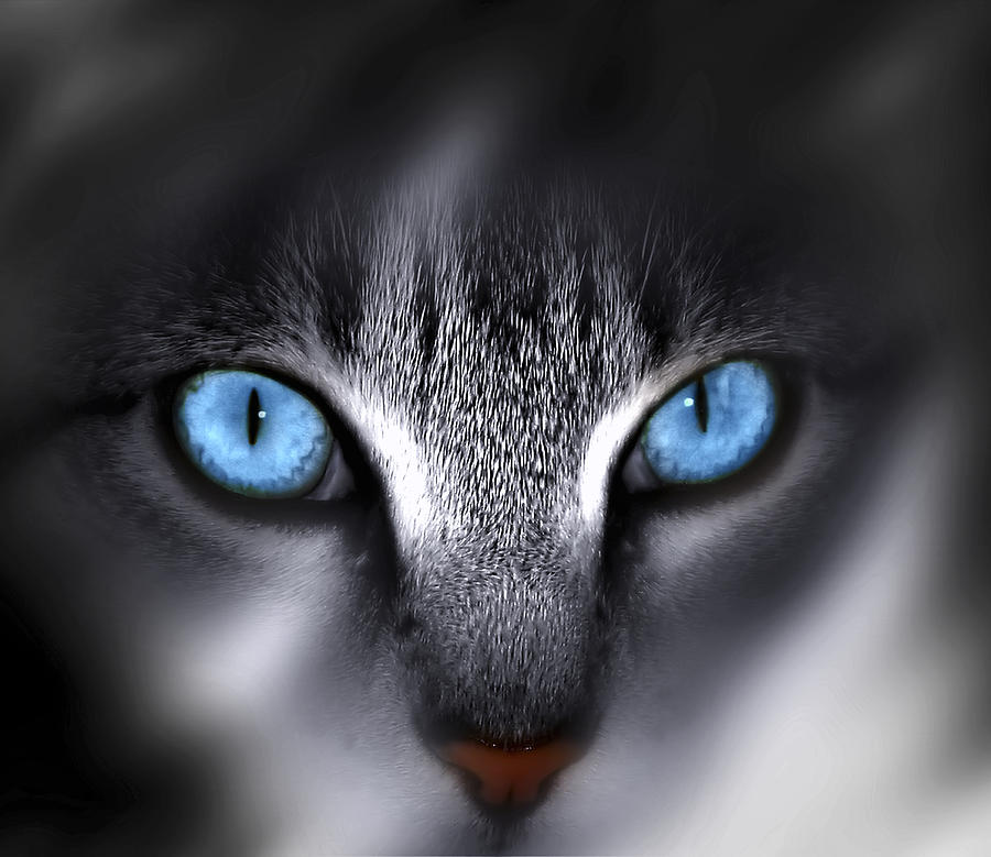 Eyes Photograph - Baby Blues by Cecil Fuselier