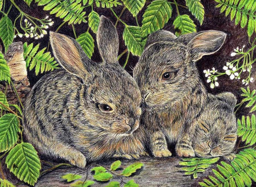 Baby Bunnies Drawing By Marlene Bonneville
