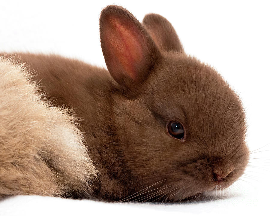 Baby Bunny  #03074 by John Bald