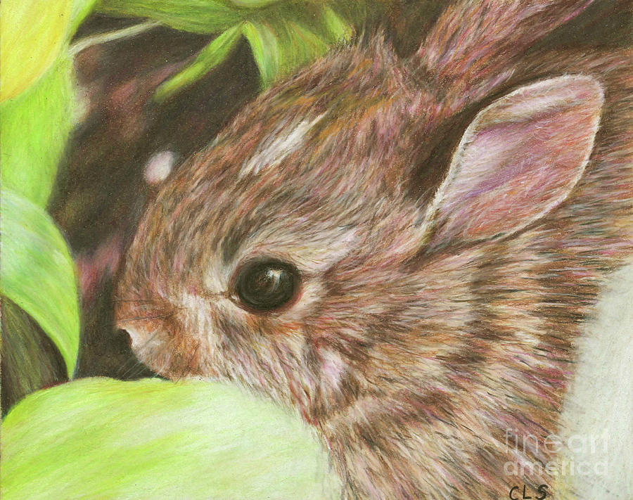 Baby Drawing - Baby Bunny by C L Swanner