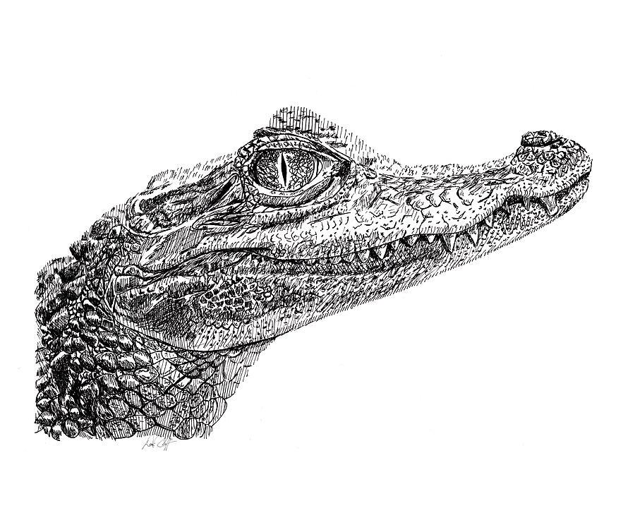 baby crocodile drawing by dsc arts