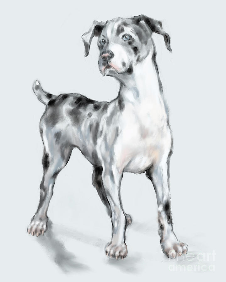 Great Dane Digital Art - Baby Dane by Lora Serra