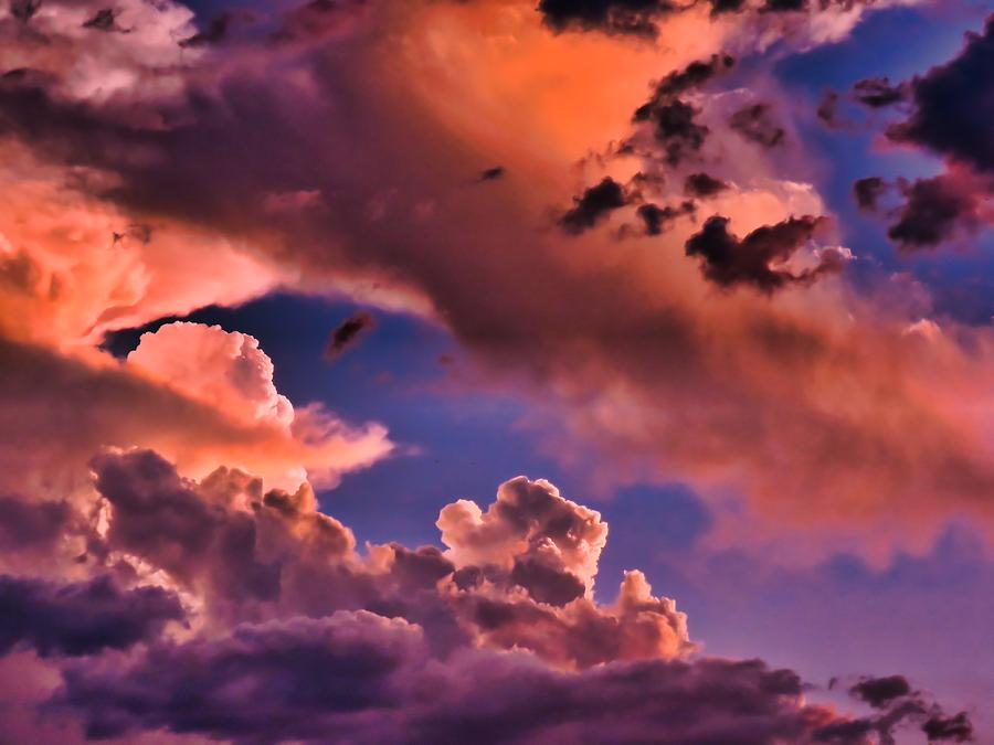 Arizona Photograph - Baby Dragons Fledgling Flight by Judy Kennedy