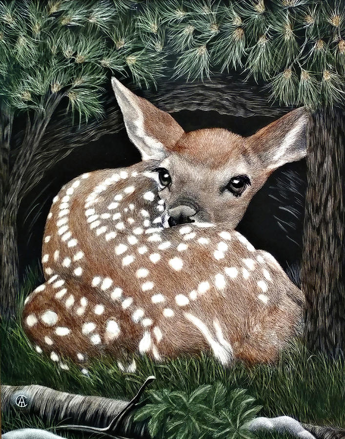 Baby Fawn by Angie Cockle