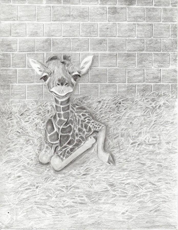 Giraffe Drawing - Baby Giraffe by Linda McMillen