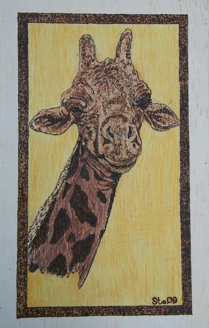 Landscape Pyrography - Baby Giraffe by Steven Steven