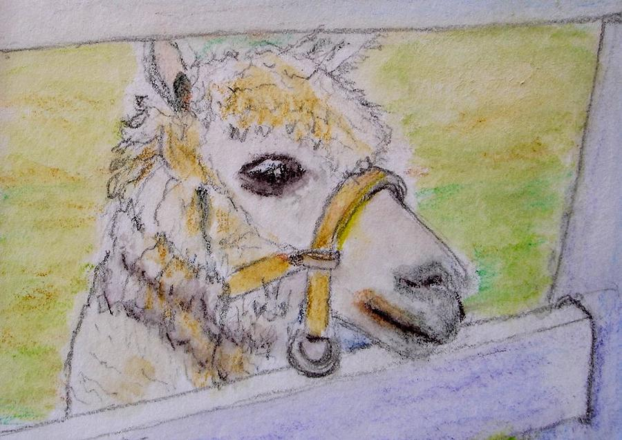 Baby Drawing - Baby Llama by Lessandra Grimley