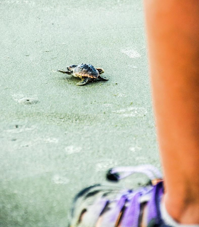 Loggerhead Turtle Photograph - Baby Loggerhead by Randy J Heath