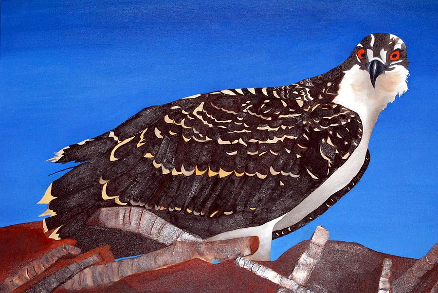 Osprey Painting - Baby Osprey by Bridgette  Symanski