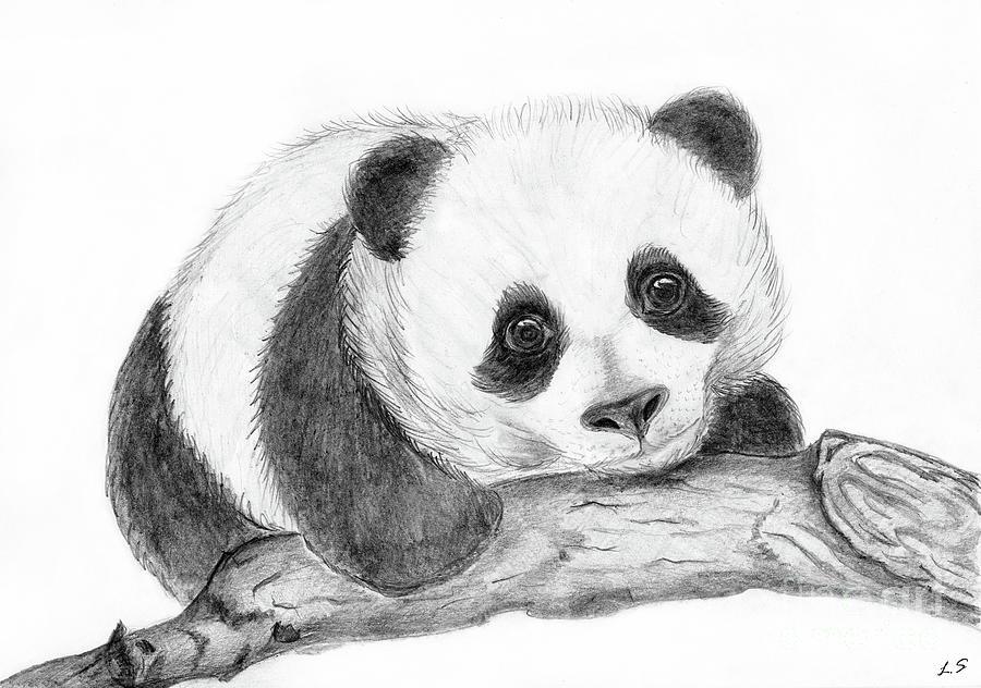 певица животные рисунки карандашом легко панда представленных этом разделе