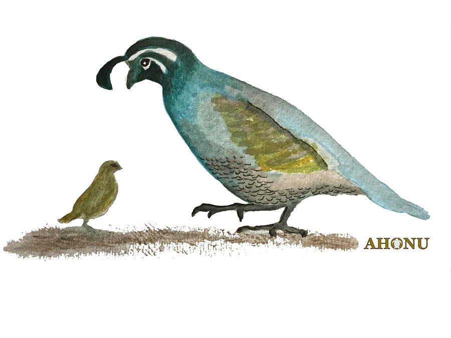 Baby Quail Learns The Rules by AHONU