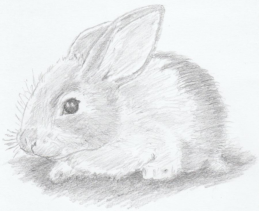 baby rabbit drawing by ernie westfall