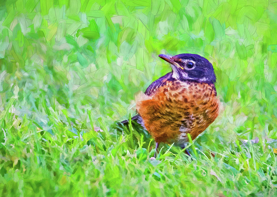 Baby Robin - Fresh From The Nest 3 - Paint Photograph