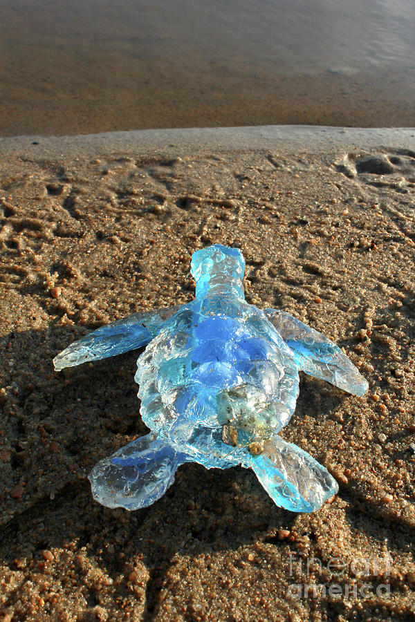 Baby Sea Turtle From The Feral Plastic Series By Adam Long Sculp Sculpture
