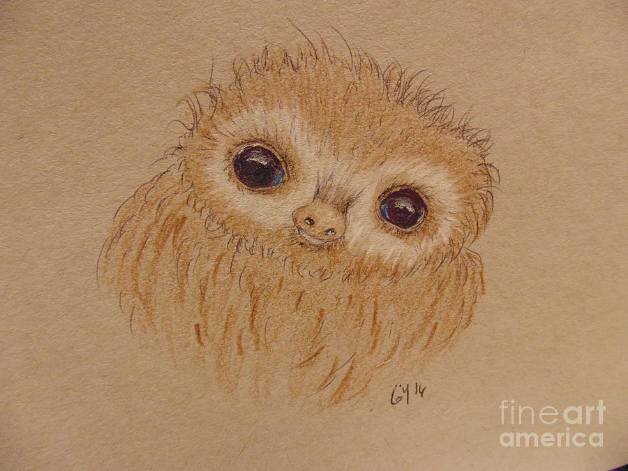 Baby Sloth Drawing - Baby Sloth by Ginny Youngblood