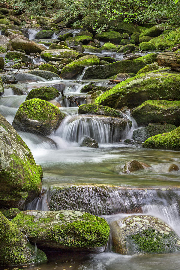 Vertical Photograph - Back Country Stream by Jon Glaser
