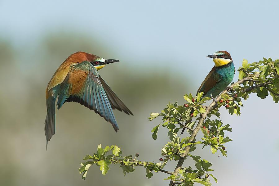 Wildlife Photograph - Back Home by Alberto Carati