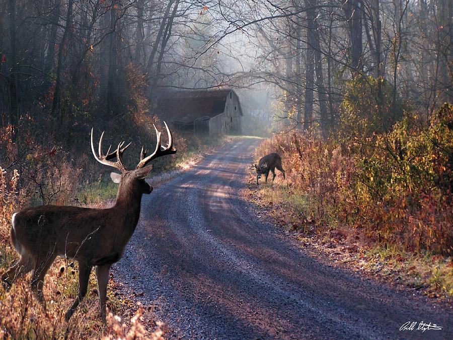 Deer Digital Art - Back Home by Bill Stephens