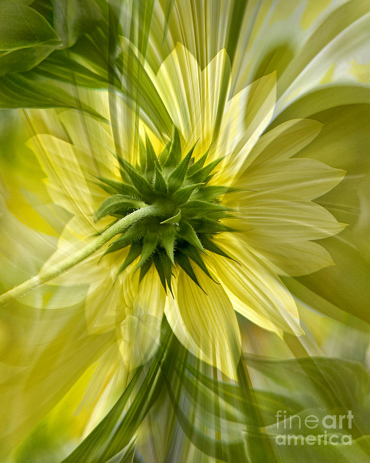 Floral Photograph - Back Petal by Chuck Brittenham