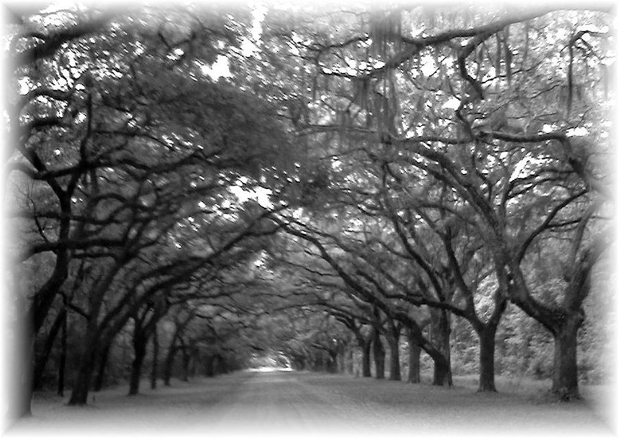 Oak Street Photograph - Back Roads by Kim Zwick