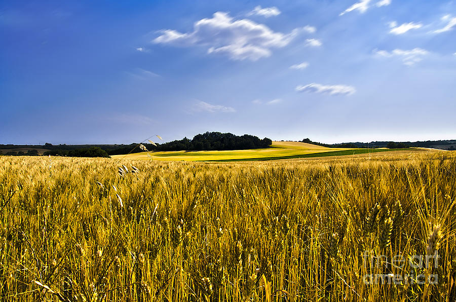 Provence Photograph - Background by Alessandro Giorgi Art Photography