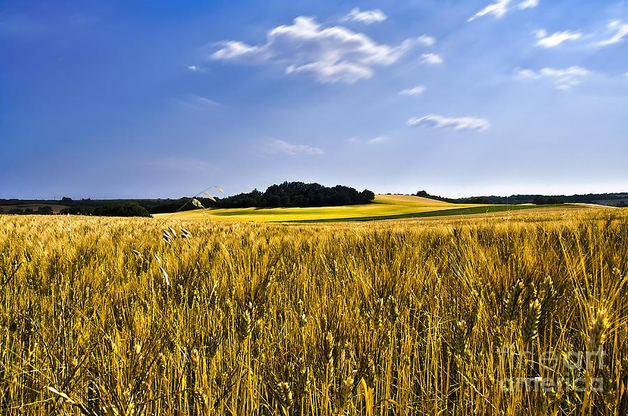 Provence Photograph - Background by Alessandro Giorgi Art Photography