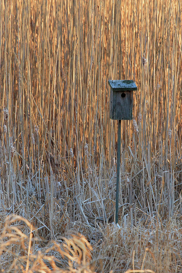 Backlit Birdhouse by Steven David Roberts