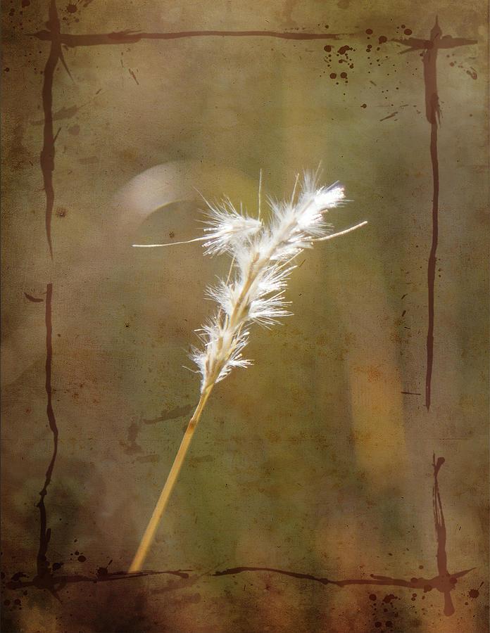 Backlit Grass by Kathy Adams Clark