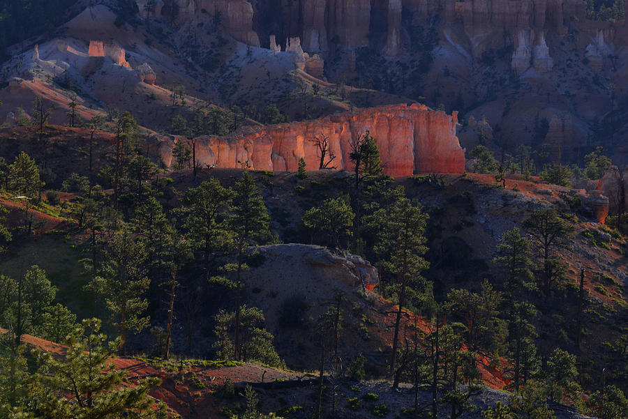 Bryce Canyon Photograph - Backlit Hoodoos At Sunrise by Stephen  Vecchiotti