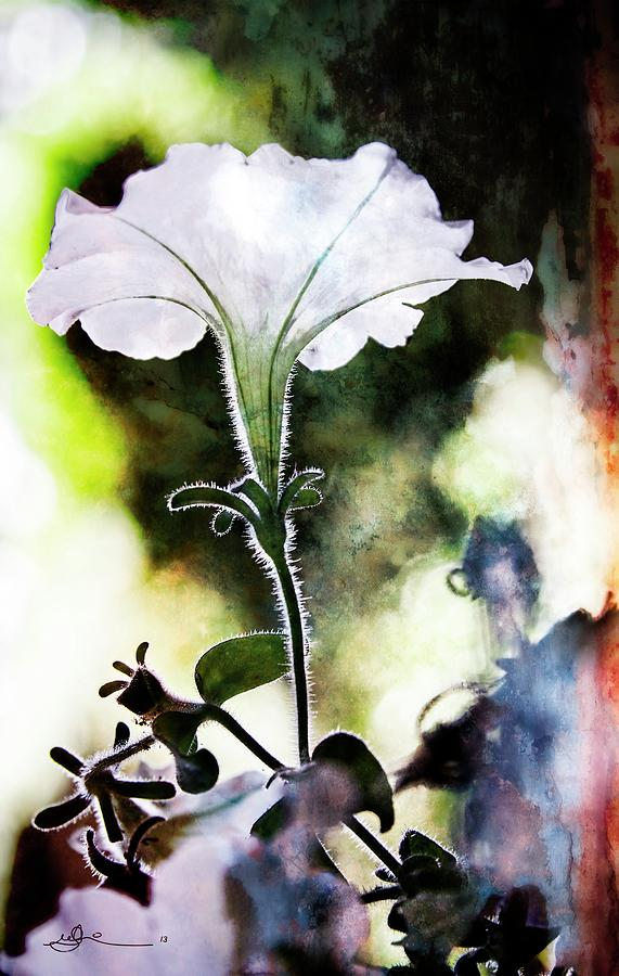 Flower Pyrography - Backlit White Flower by Bill Linn