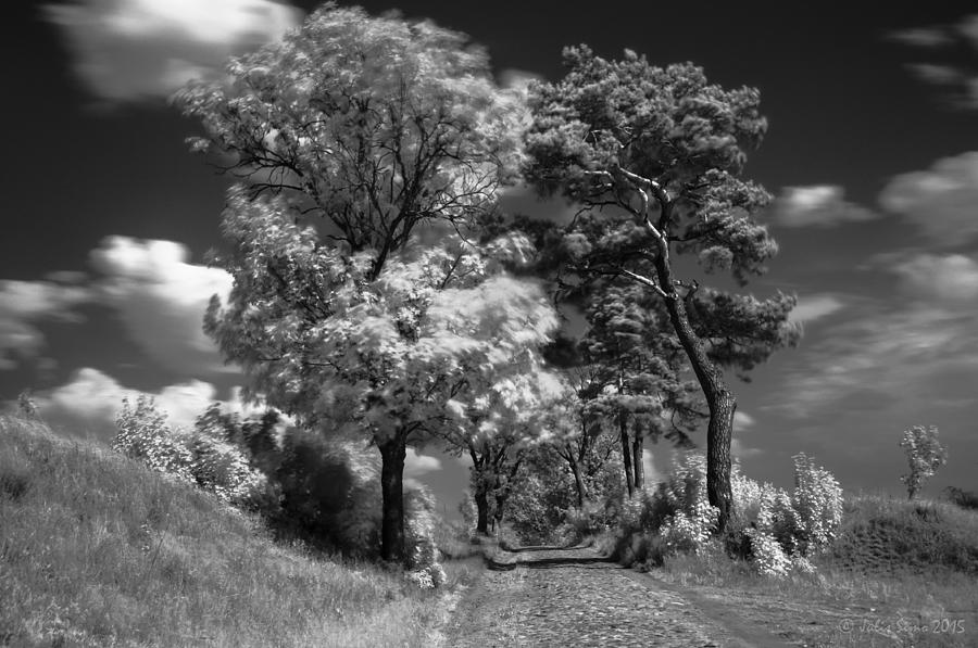 Back Road Of My  Imagination In Black And White Photograph