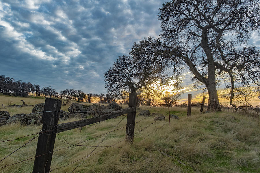 Fence Photograph - Backroads by Robin Mayoff
