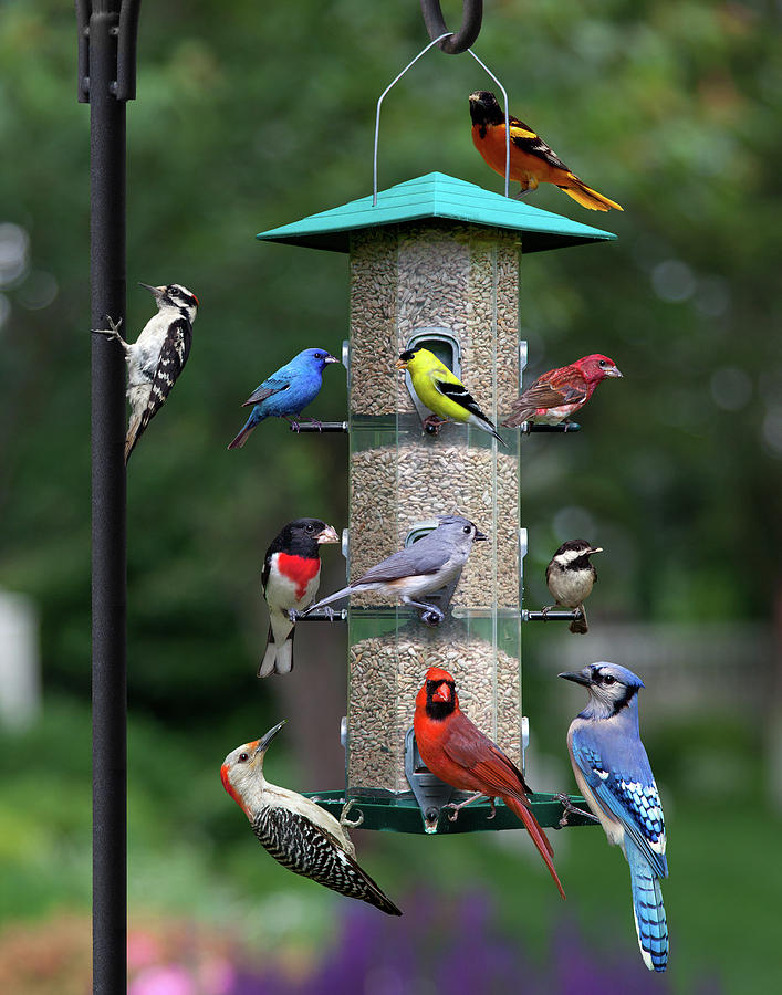 Backyard Bird Feeder by Larry Landolfi