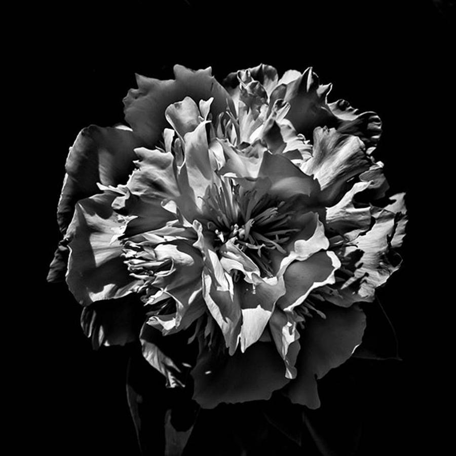 Blackandwhite Photograph - Backyard Flower. Spring Has Sprung (i by Brian Carson