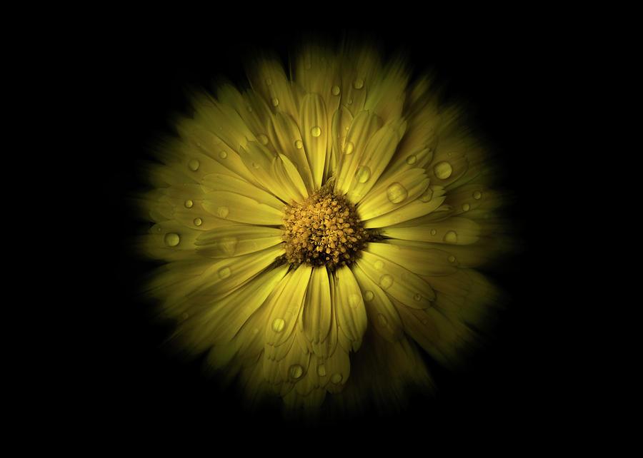 Backyard Flowers 10 Color Flow Version Photograph