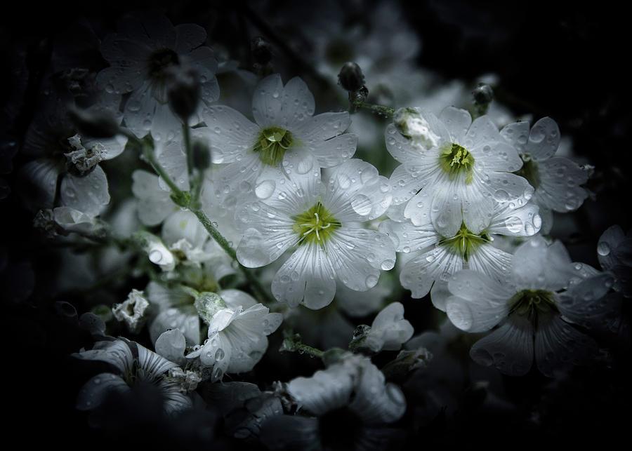 Backyard Flowers 51 Color Version Photograph