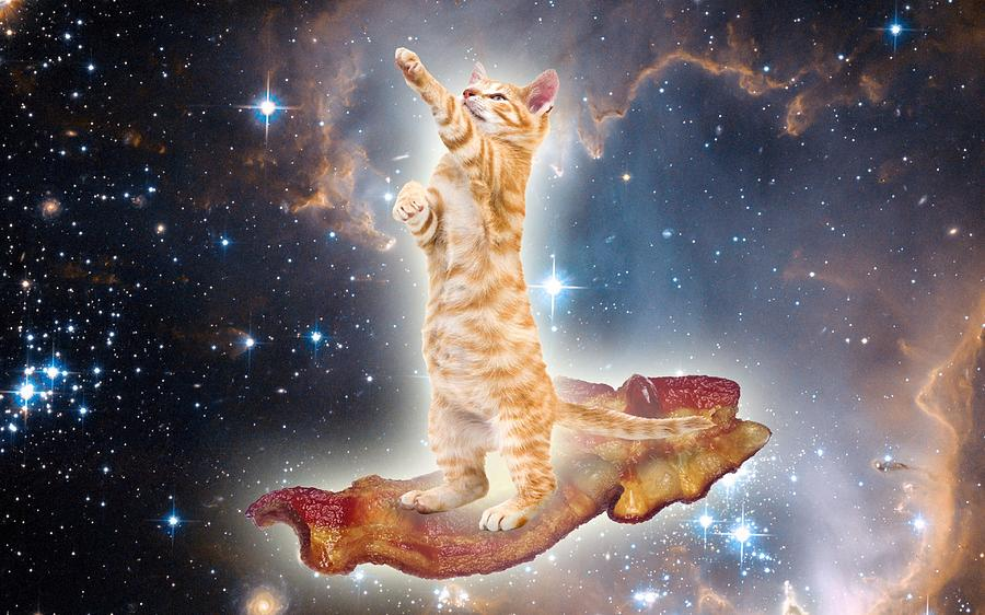 Funny Cat Photograph Bacon Surfing Cat In The Universe