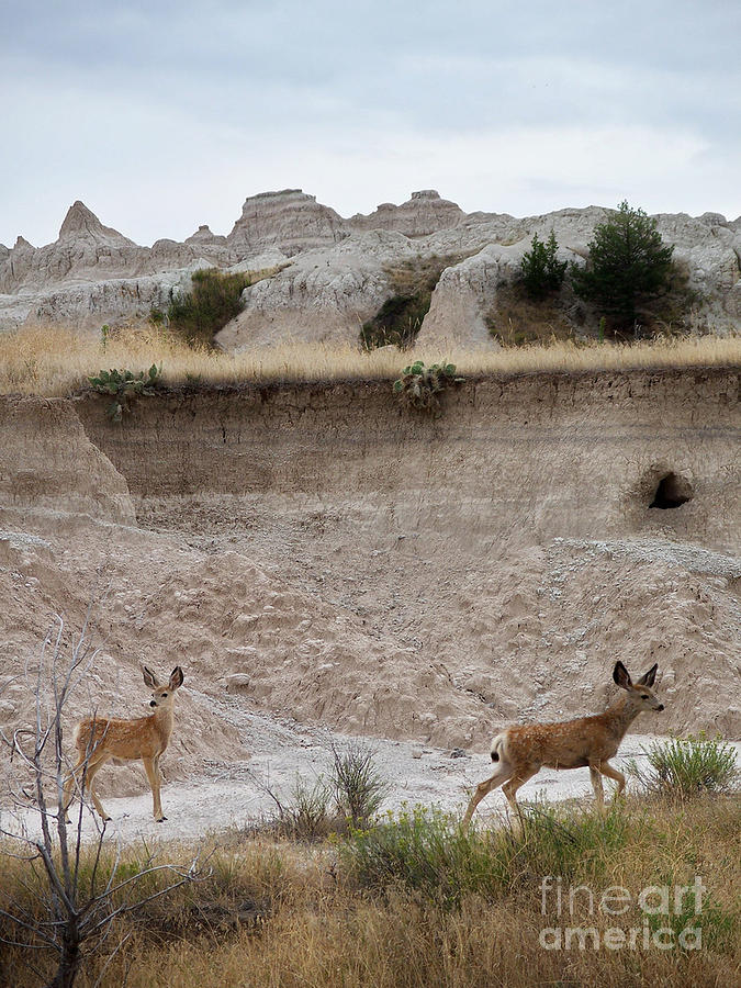 Badlands Photograph - Badlands Deer Sd by Tommy Anderson