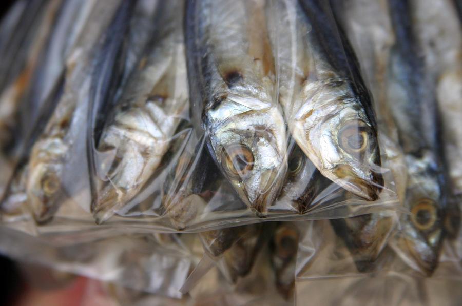 Photographer Photograph - Bag O Fish 2 by Jez C Self