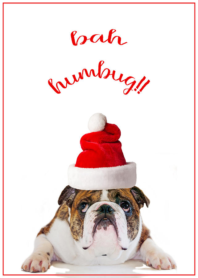 Bah Humbug English Bulldog Christmas Digital Art by SharaLee Art