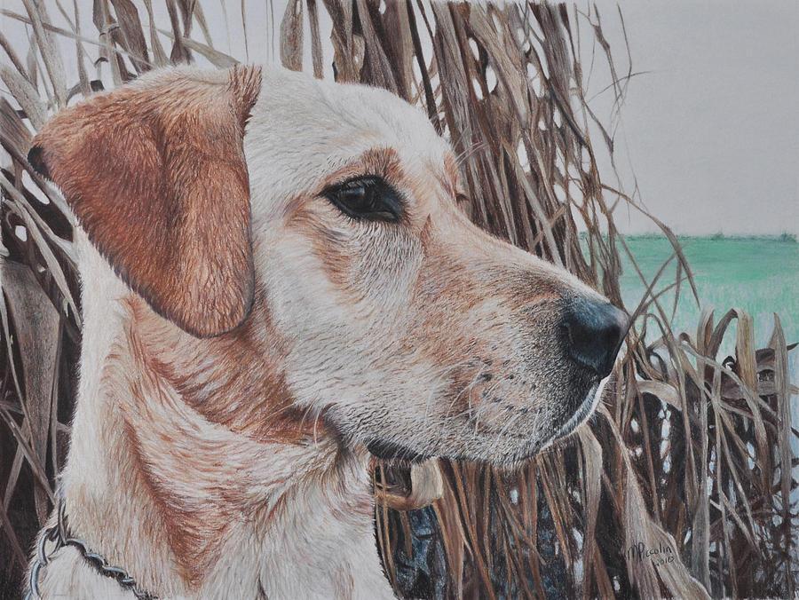 Dog Drawing - Bailey by Marlene Piccolin