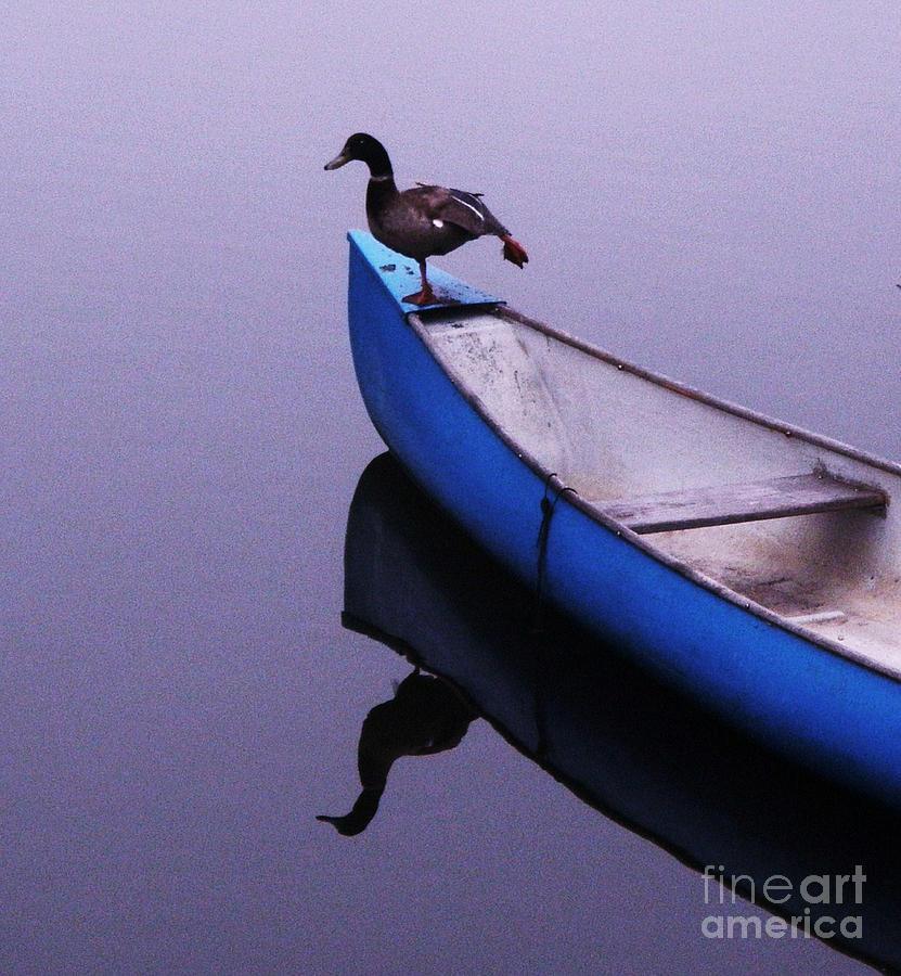 Balance Photograph - Balance by Daniele Smith