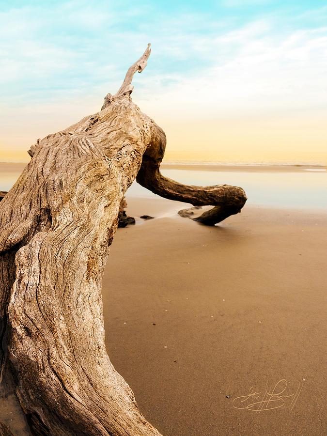 Driftwood Beach Photograph - Balance by Geoff Powell