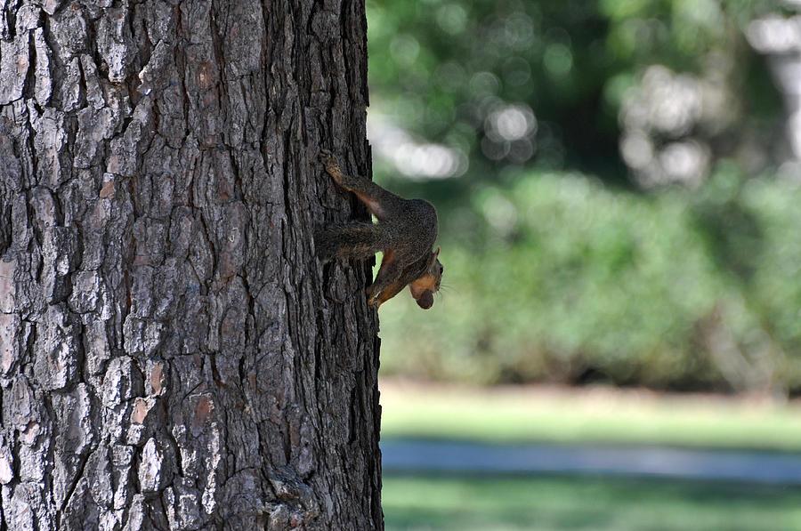 Blanton Photograph - Balancing A Nut by Teresa Blanton