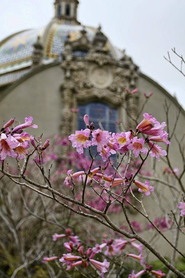Balboa Park Photograph - Balboa Park Building And Spring Flowers - San Diego by Waterdancer