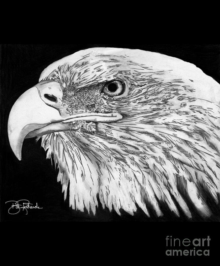 Eagle Drawing - Bald Eagle #4 by Bill Richards