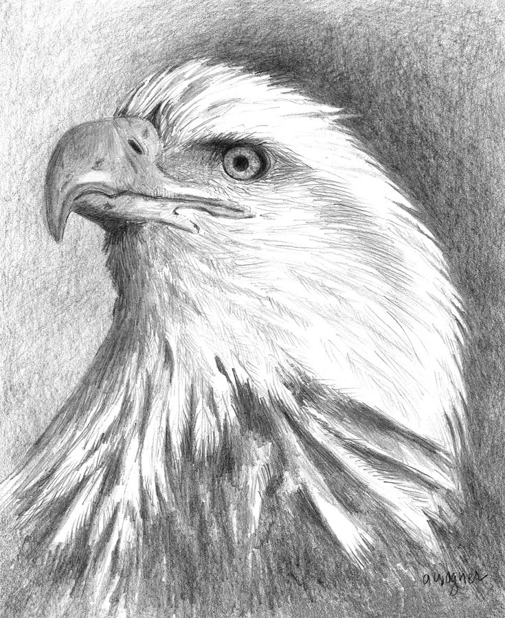 Eagle Drawing - Bald Eagle by Arline Wagner