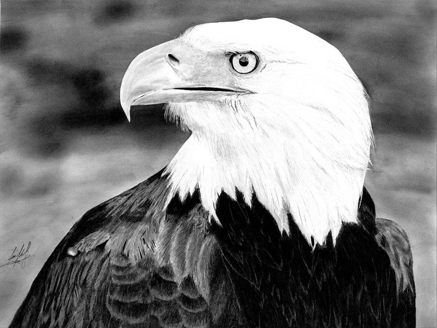 bald eagle drawing drawing by james schultz